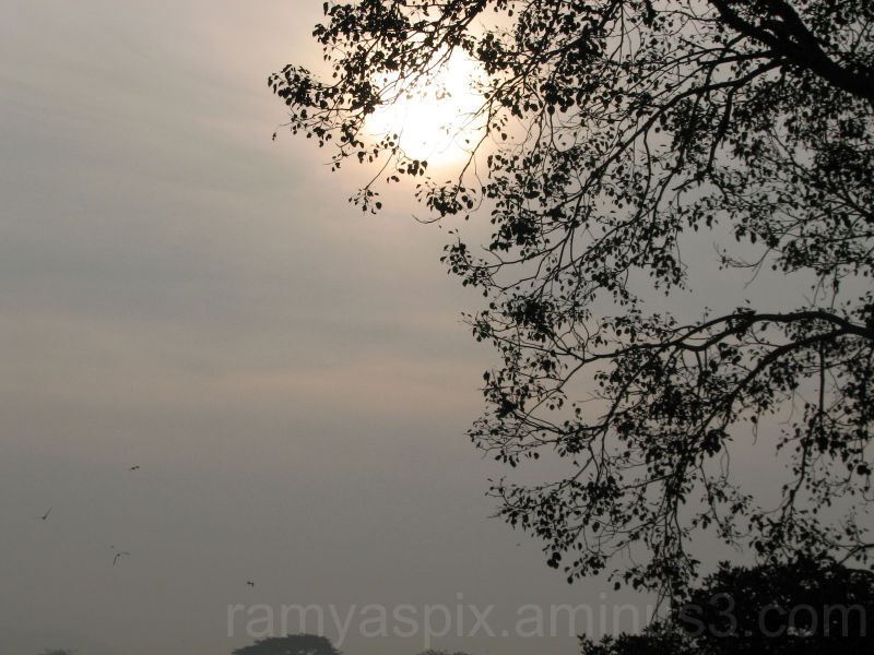 Sun rises amidst the marsh trees