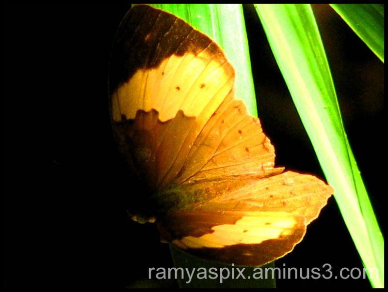 Flutter-fly