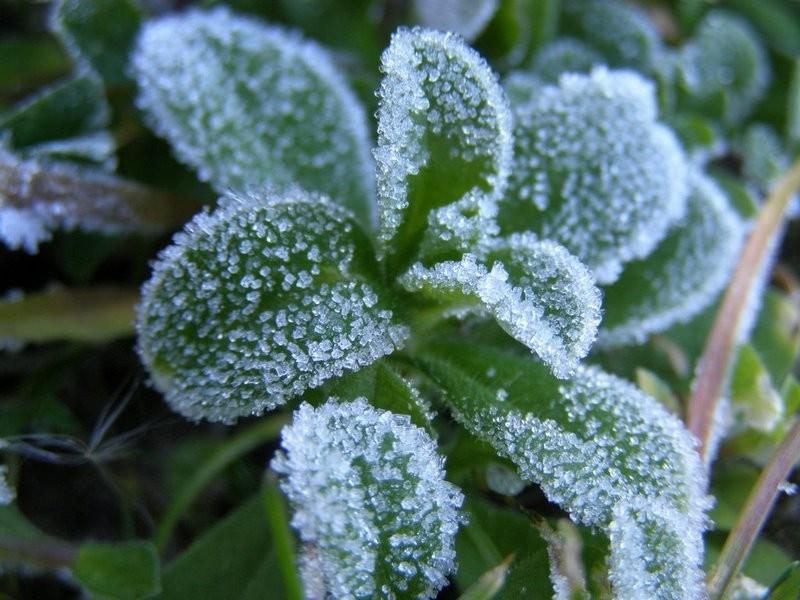 Frost-bite