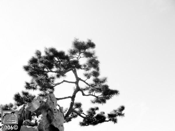 Bonzai tree