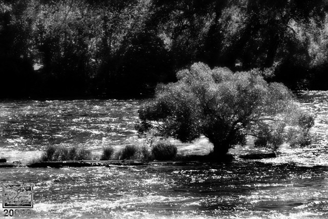 A Tree on a River