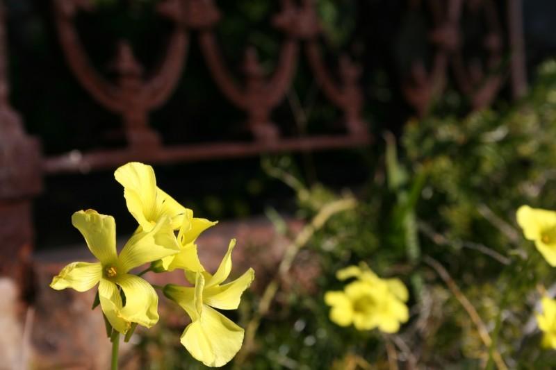close-up macro of flower