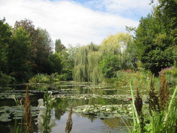 Monet's garden, August 2009