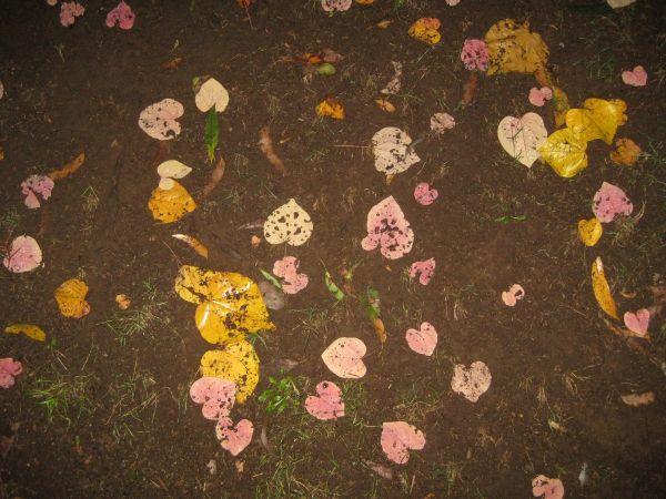 Fallen leaves, April 2010