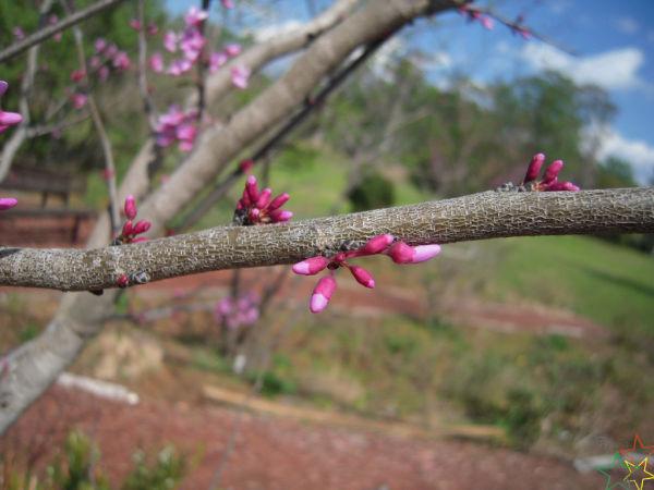 Soon To Bloom