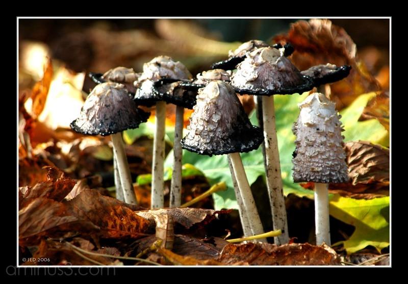Mushrooms JED
