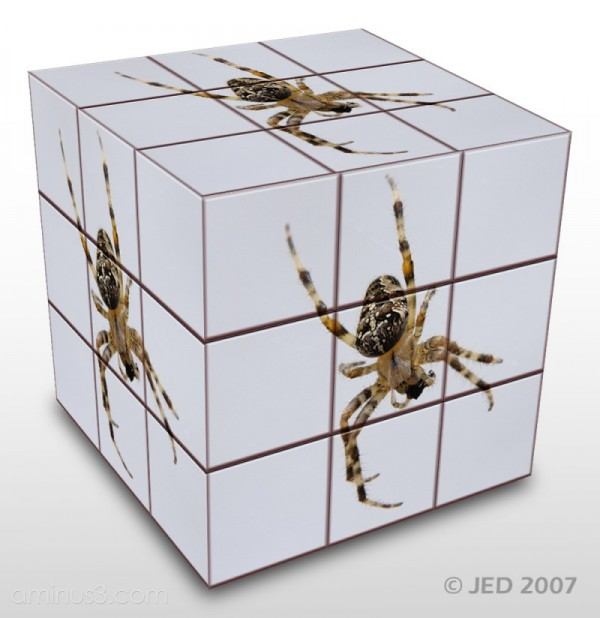 JED Spider Cube