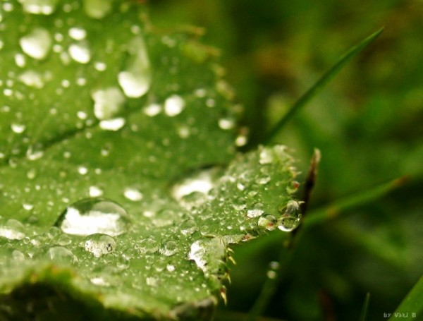 a macro of some leaves after the rain