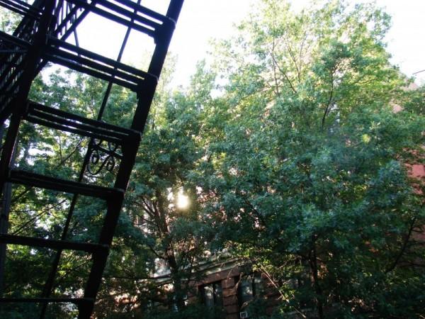 View toward the sky