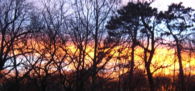 A bright sunrise thru the trees