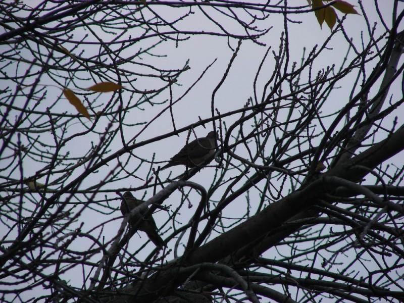 Birds in a bare tree