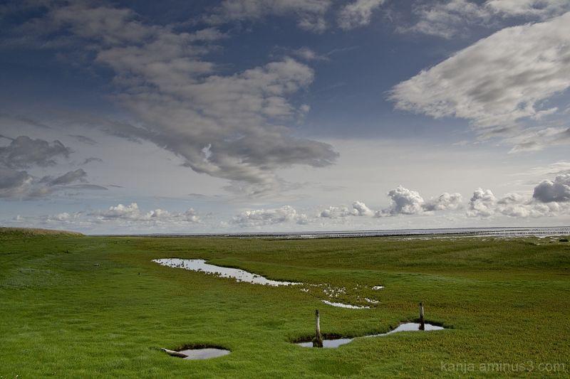 marshland in the sun