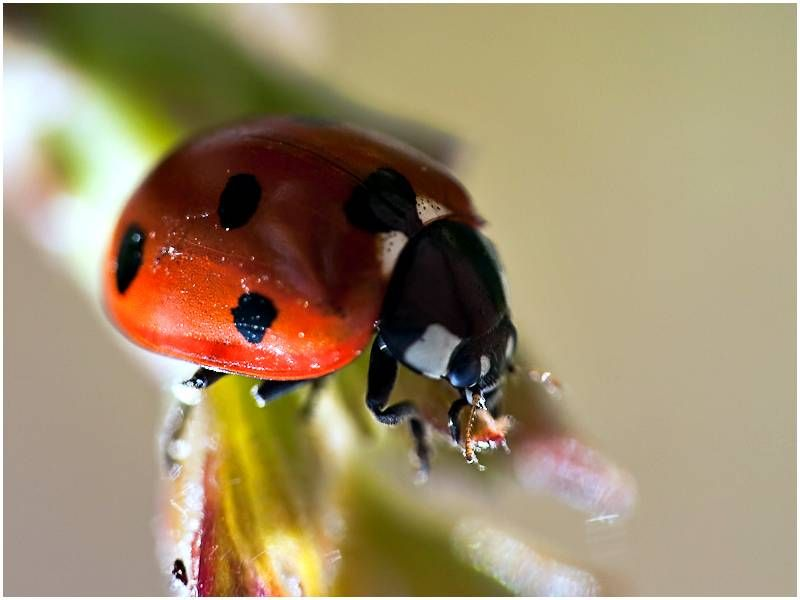 l.bug