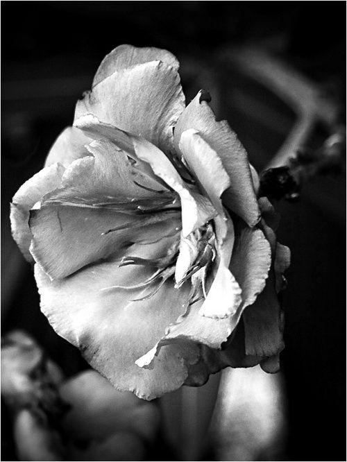 flower in bw.