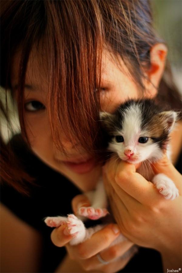 Adopt Me?