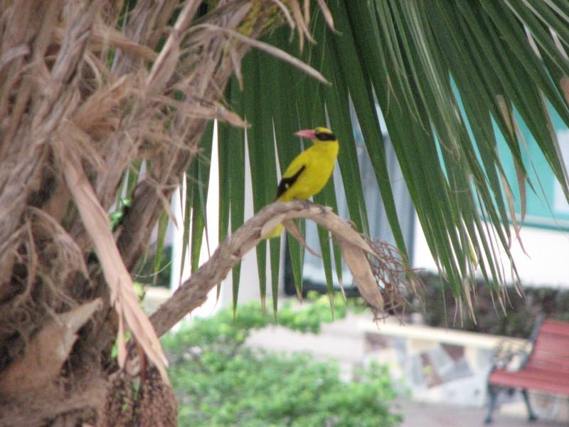 my birdie!!