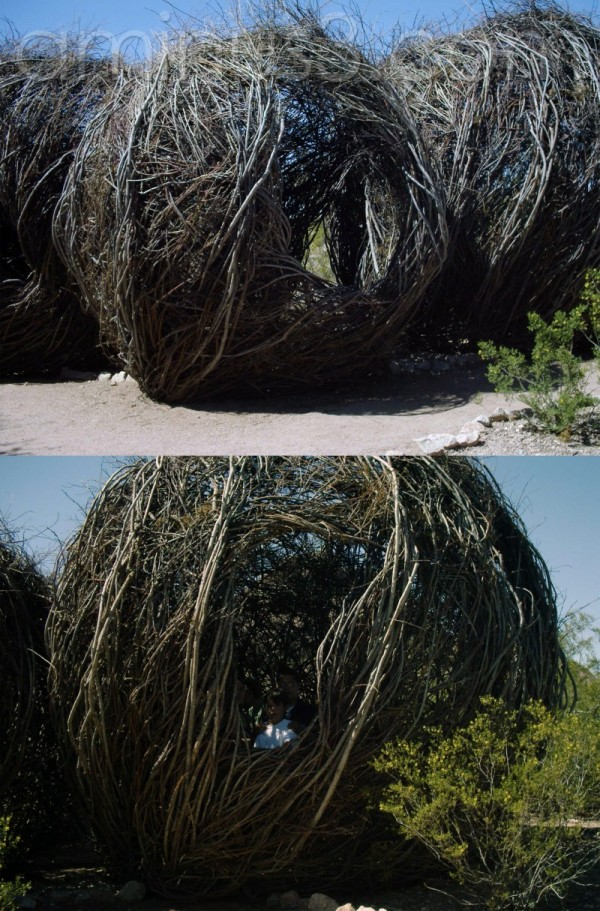 Desert Botanical Exhibit by Patrick Dougherty