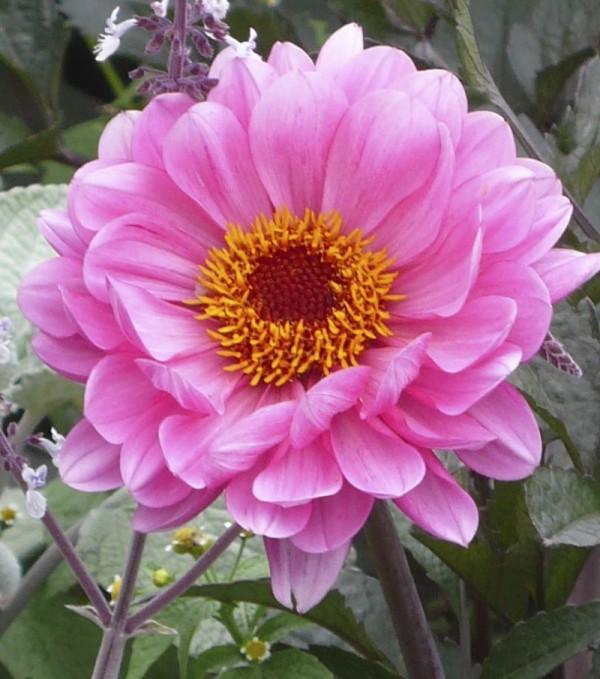A flower in Jardin des Tuileries