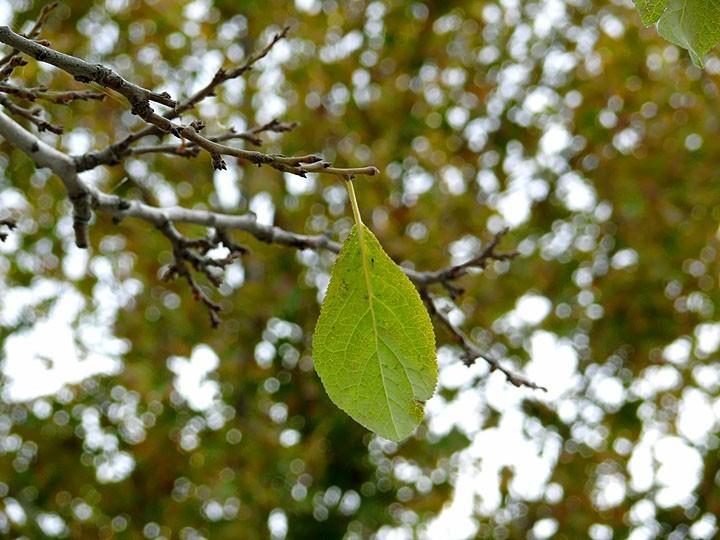 Foliage no.1