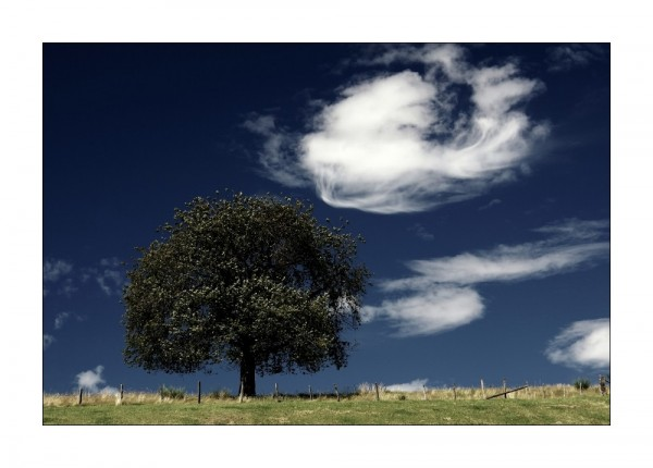 The Old Tree And His Wispering Clouds