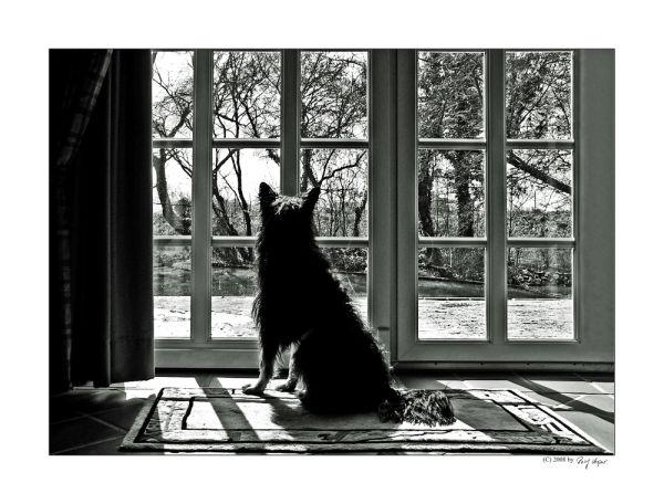 Elvis In The Window
