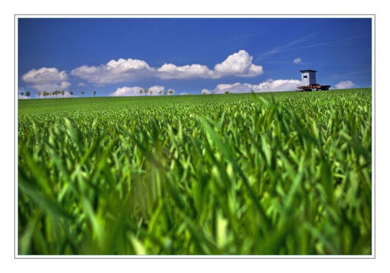 In Field
