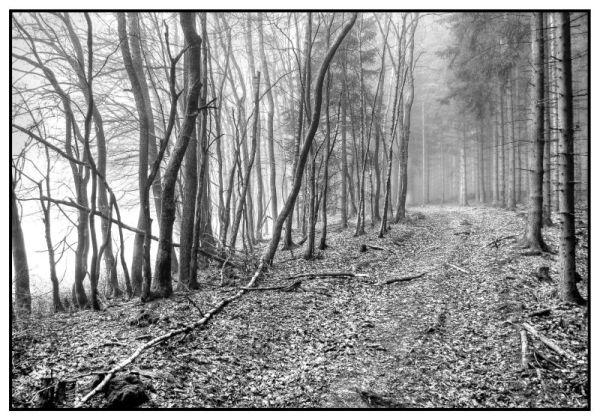 Schön und nicht nur seltsam im Nebel zu wandern
