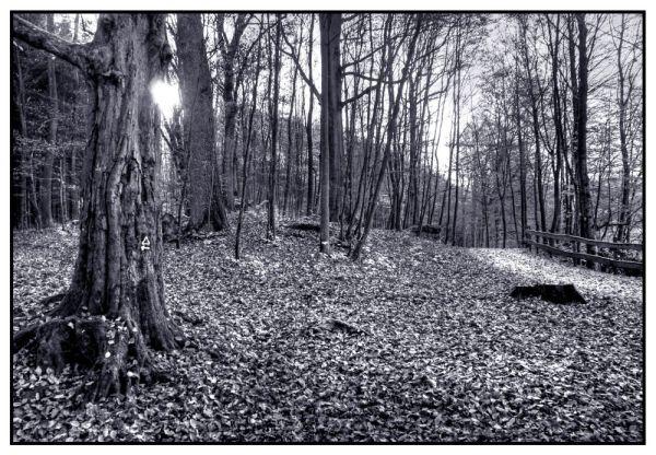 Spätnachmittags im Wald