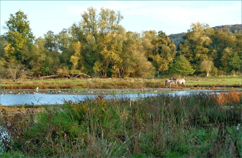 Reservat - Kiebitzwiese