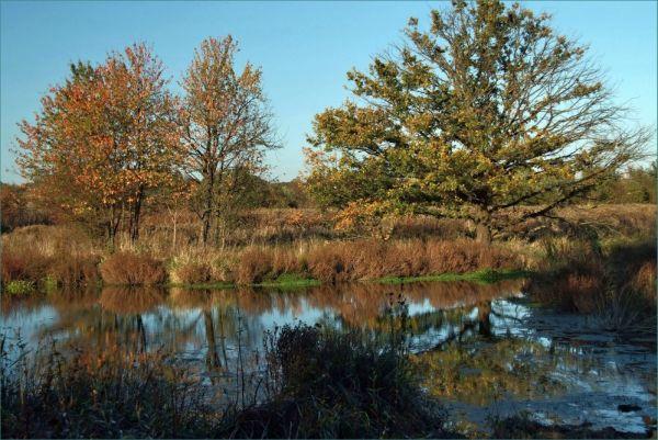 Baum im Sumpf