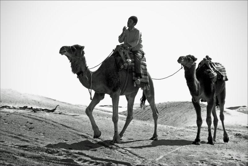 Camel Smoker