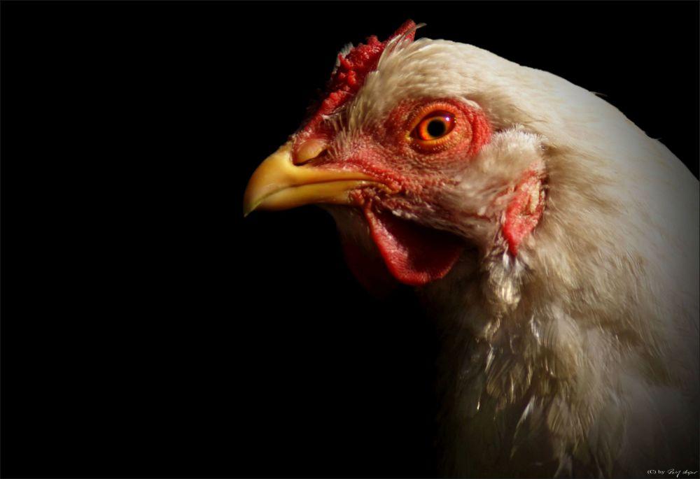 Chicka