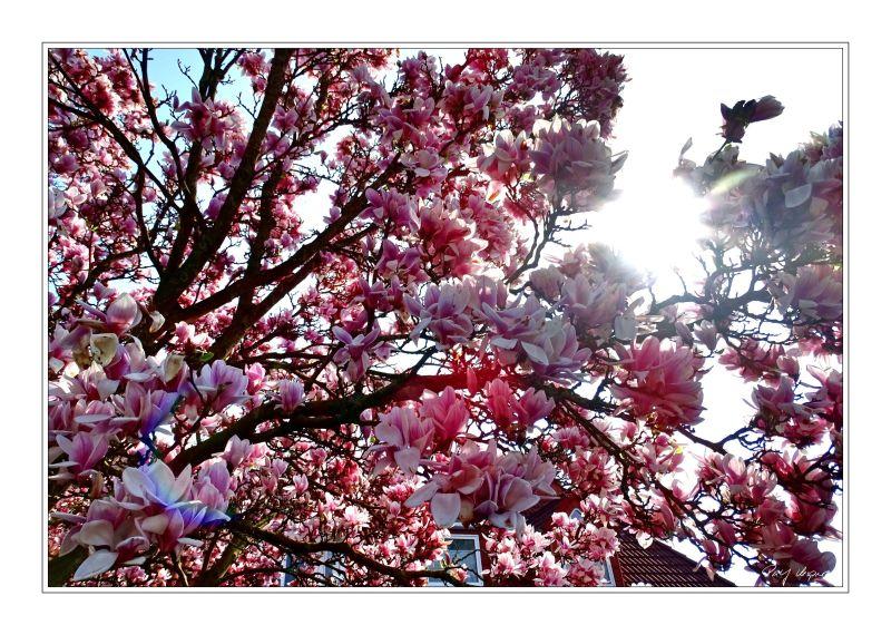 Ein Frühlingsbild