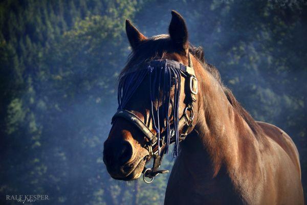 Smokey Horse