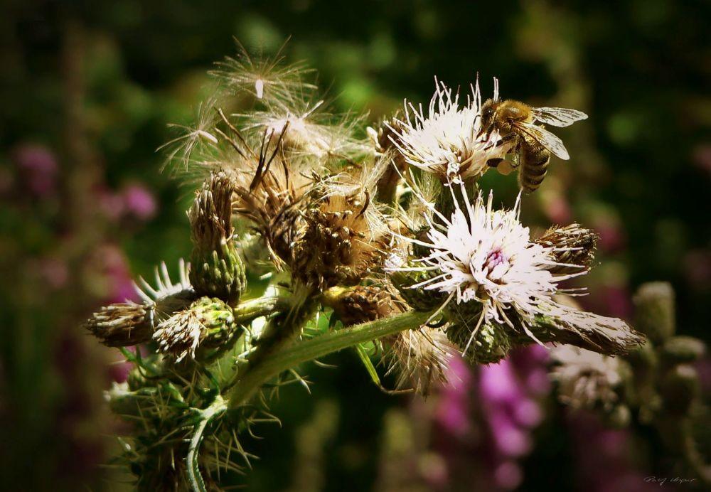 Diligent Bee