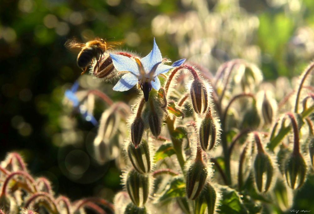 Bee Busy