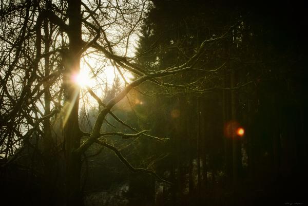 Wintersonnenlicht