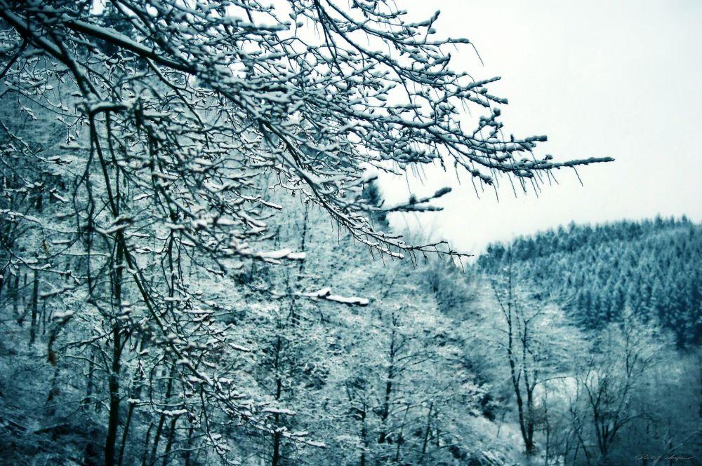 New Snow Again