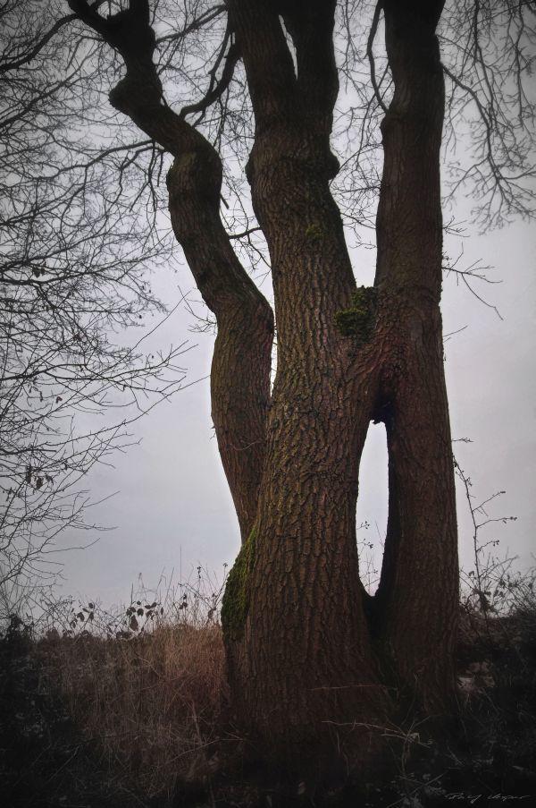 Siam Tree