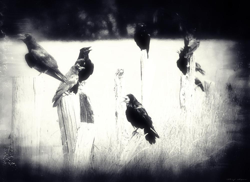 Crow(d)
