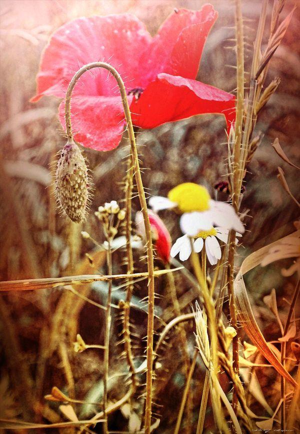 Feldblumen