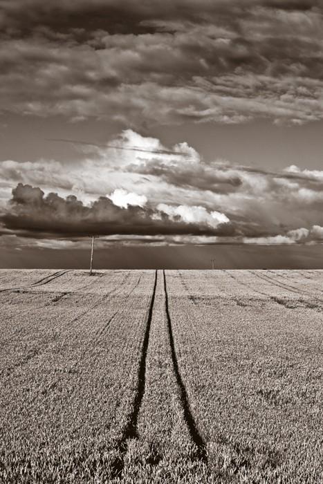 Scotish Field