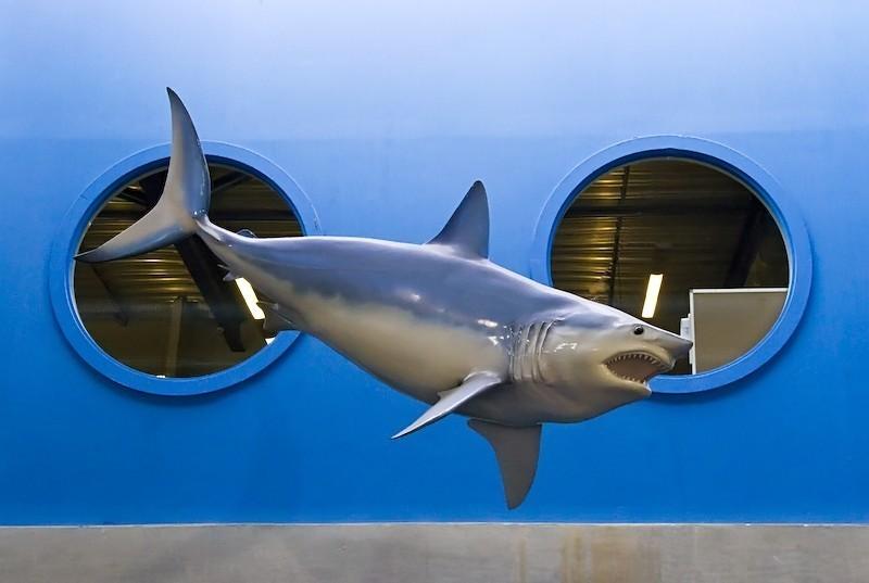 shark, dead shark, hanging dead shark