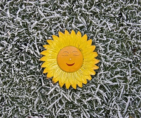 frost sun winter