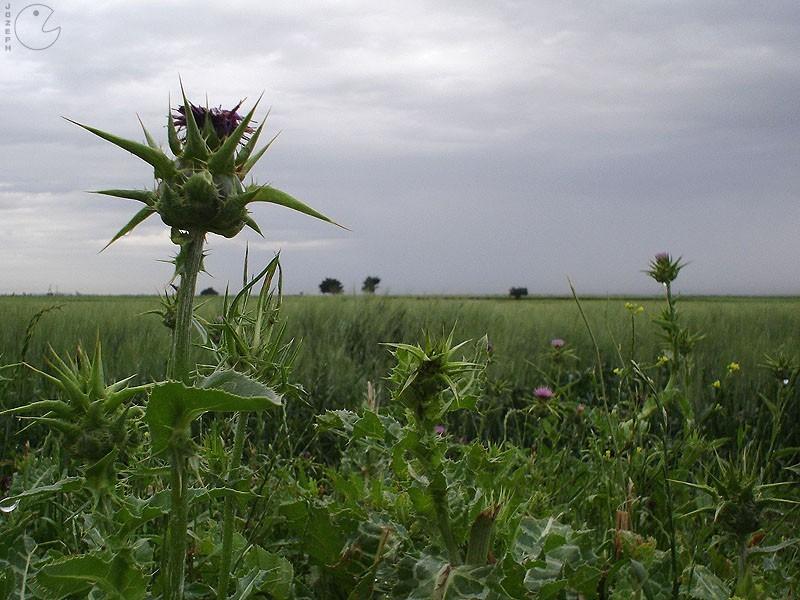 Sting Flower