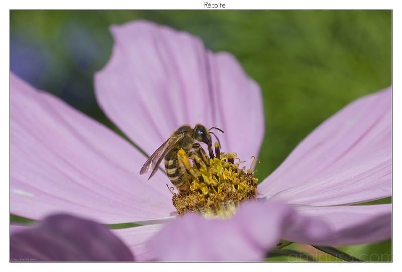 abeille, nicolas ernult