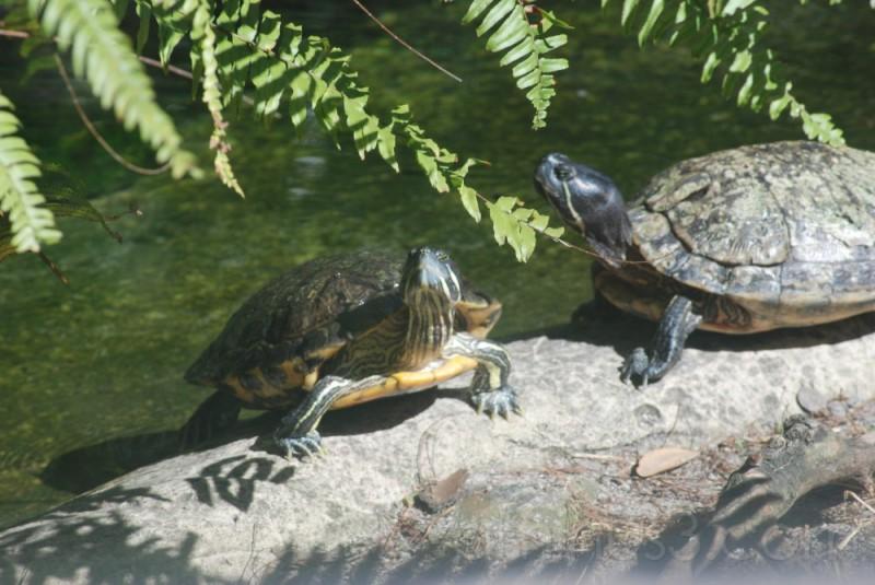 turtles at seaworld