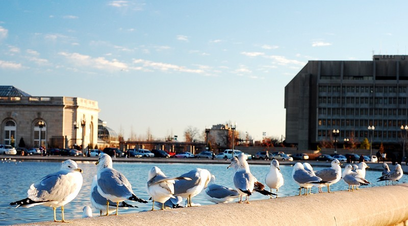 birds meeting washington dc