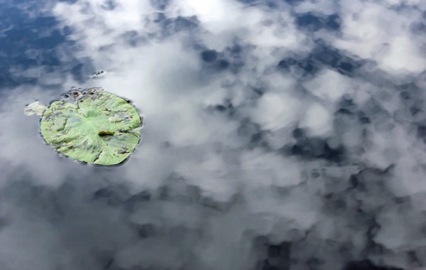 Alone water lily and the reflect of clouds
