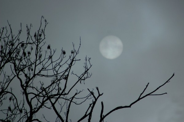 haundted tree and full moon